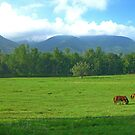 Horses in the Valley - Cades Cove by glennc70000