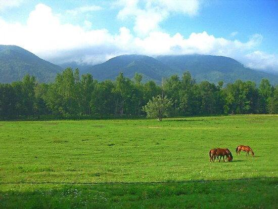 Horses in the Valley - Cades Cove by Glenn Cecero
