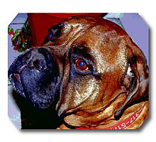 red say's  Hi Ginny Photographic Print