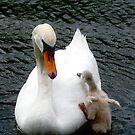 mom help! by wistine
