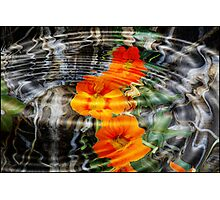 Orange Wildflowers in the Forest: Photographic Print