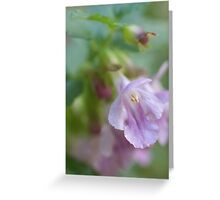 Showy Calamint Greeting Card