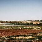 Farming by DarrynFisher