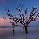 Stranded Trees by JHRphotoART