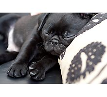 Sleeping Pug Photographic Print