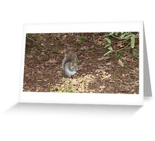 Squirrel Eating vegetables Greeting Card