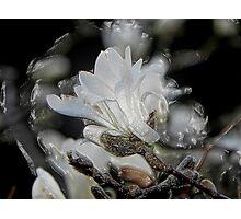 Tree Buds © Photographic Print