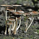Shrooms by Paul Holman