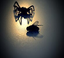 """Will you step into my parlor?"" said the spider to the fly... by Josephine Pugh"
