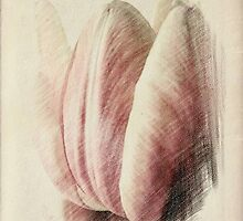 Pastel Tulip © by Dawn M. Becker