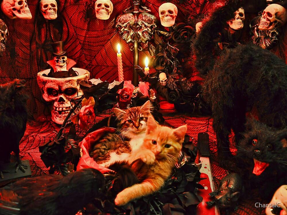 Venus & Di Milo ~ Gothic Kitty Cat Kittens in Halloween Art Decor by Chantal PhotoPix