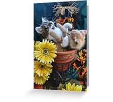Venus & Di Milo ~ Cute Kitty Cat Kittens in a Flower Pot Playing in Fall Colors Greeting Card