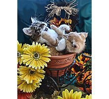 Venus & Di Milo ~ Cute Kitty Cat Kittens in a Flower Pot Playing in Fall Colors Photographic Print