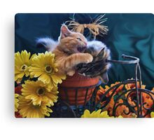 Di Milo ~ Psychocat ~ Angry Kitten Biting Kitty Cat Canvas Print