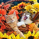 Venus & Di Milo ~ Cute Kitty Cat Kittens in Fall Colors by Chantal PhotoPix