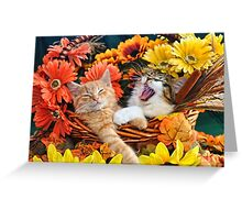 Venus & Di Milo ~ Cute Kitty Cat Kittens in Fall Colors Greeting Card