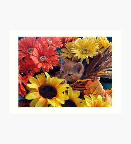 Di Milo ~ Cute Kitty Cat Kitten in Fall Colors Art Print