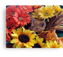 Di Milo ~ Cute Kitty Cat Kitten in Fall Colors Canvas Print