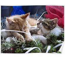 Venus & Di Milo ~ Contemplation ~ Cute Winter Kitty Cat Kittens Poster