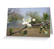 Spring blossoms Greeting Card