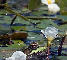 Frog in Lily Pads - My Backyard Pond by Debbie Pinard