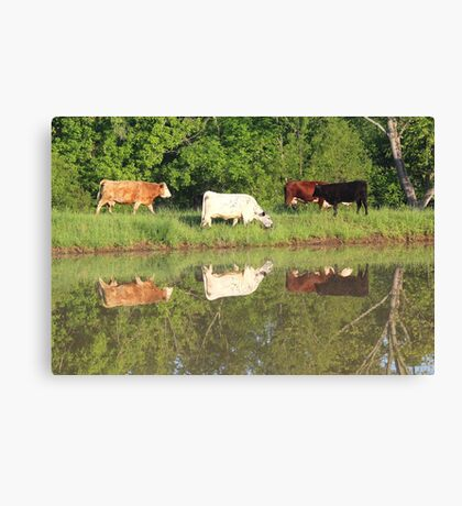 Four cows by pond, taken with a canon rebel t3i. taken in southeast missouri Canvas Print