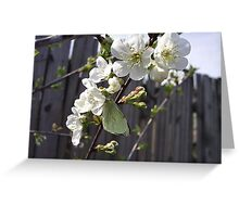 Spring blossoms and butterfly Greeting Card