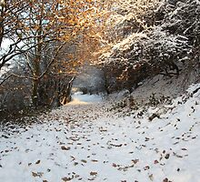 Winter Wonderland by EstherB