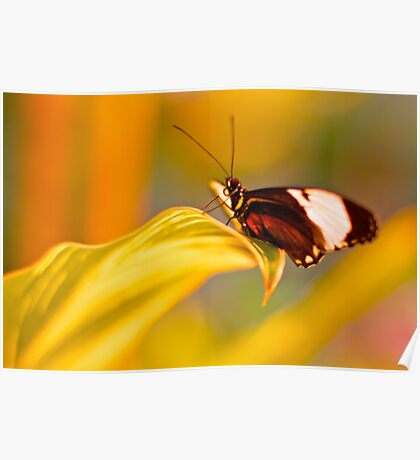 Luminous Yellow Flower with Gracious Butterfly  Poster