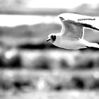 Fly by by wildone