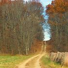 Up The Wooded Path by Sheryl Gerhard