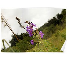 flowers in Swaziland Poster