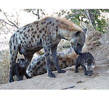 Hyena Family Photographic Print