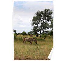 Kruger wildlife Poster