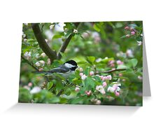 Black-capped Chickadee in Apple Blossoms Greeting Card
