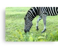 South Africa zebra Canvas Print