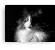 Whiskers ~  Shadows & Light ~ Captivated Cat Canvas Print