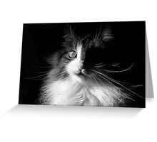 Whiskers ~  Shadows & Light ~ Captivated Cat Greeting Card