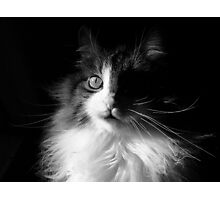 Whiskers ~  Shadows & Light ~ Captivated Cat Photographic Print