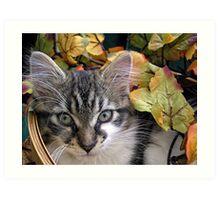 Venus ~ Cute Kitty Cat Kitten in Decorative Fall Colors Art Print