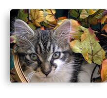 Venus ~ Cute Kitty Cat Kitten in Decorative Fall Colors Canvas Print