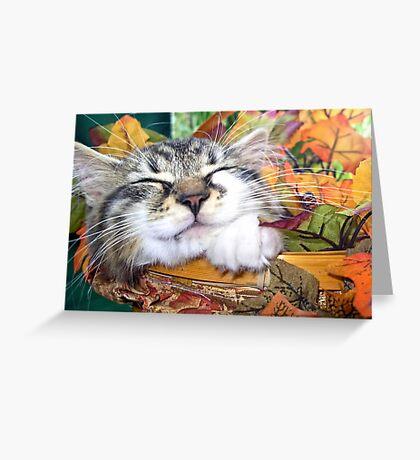 Venus ~ Cute Kitty Cat Kitten Sleeping in a Basket ~ Fall Colors Greeting Card