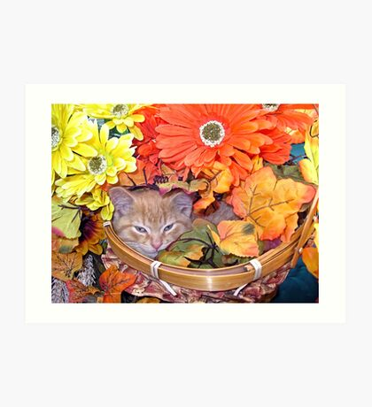 Di Milo ~ Hidden ~ Fall Kitten Art Print
