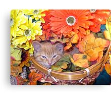 Di Milo ~ Hidden ~ Fall Kitten Canvas Print