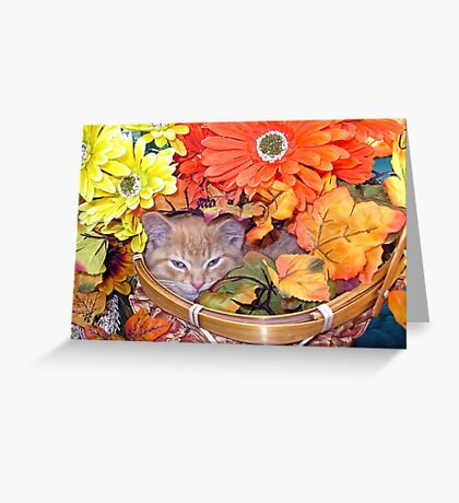 Di Milo ~ Hidden ~ Fall Kitten Greeting Card