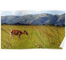 Swazi impala Poster
