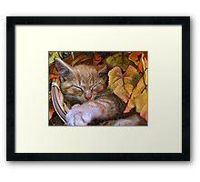 Di Milo ~ Cute Kitty Cat Kitten in Decorative Fall Colors Framed Print