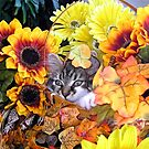 Venus ~ Hidden ~ Fall Kitten by Chantal PhotoPix