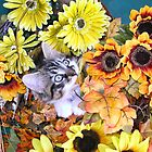 Venus ~ Leafy Vegetables ~ Kitty Cat Kitten Chewing a Fall Leaf ~ Autumn Colors by Chantal PhotoPix