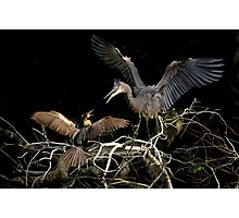 Hey You, Get Off of My Branch !! Photographic Print